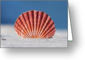 Seashell Photography Greeting Cards - Seashell In Sand With Blue Ocean Background Greeting Card by Tanya Ann Photography