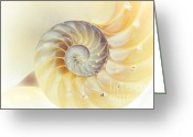 Seashell Art Photo Greeting Cards - SeaShell. Light Version Greeting Card by Jenny Rainbow