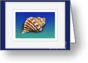 Seashell Art Photo Greeting Cards - Seashell Wall Art 1 - Blue Frame Greeting Card by Kaye Menner