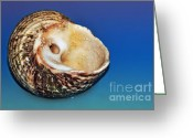 Seashell Art Photo Greeting Cards - Seashell Wall Art 2 Greeting Card by Kaye Menner