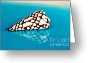 Shell Texture Greeting Cards - Seashell Wall Art 8 - Conus Marmoreus Greeting Card by Kaye Menner