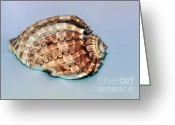 Shell Texture Greeting Cards - Seashell Wall Art 9 - Harpa Articularis Greeting Card by Kaye Menner