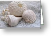 Beach Decor Digital Art Greeting Cards - Seashells Study 1 Greeting Card by Danielle  Parent