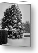 Snow Storm Prints Greeting Cards - Season of White Greeting Card by Steven Ainsworth