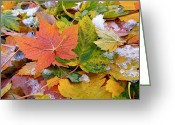Fallen Leaf Greeting Cards - Seasonal Mix Greeting Card by Rona Black