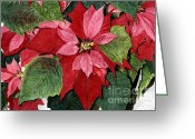 Barbara Painting Greeting Cards - Seasonal Scarlet Greeting Card by Barbara Jewell