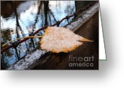 Maple Photographs Greeting Cards - Seasons Balance Greeting Card by Steven Milner