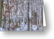 Snow Framed Prints Greeting Cards - Seasons First Snow Greeting Card by Gerlinde Keating - Keating Associates Inc