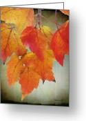 Lacy Abstract Greeting Cards - Seasons leaves Greeting Card by Anne Lacy