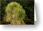 Lichen Greeting Cards - Seasons of Magic - Hoh Rainforest Olympic National Park WA Greeting Card by Christine Till
