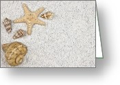 Background Greeting Cards - Seastar And Shells Greeting Card by Joana Kruse