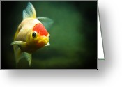 Goldfish Greeting Cards - Secret Life Of Wanda Greeting Card by Tomasz Bobrzynski (tomanthony)