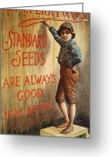 Tom Boy Greeting Cards - SEED COMPANY POSTER, c1890 Greeting Card by Granger