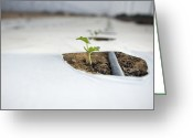 Melon Greeting Cards - Seedling Growing in a Greenhouse Greeting Card by Noam Armonn
