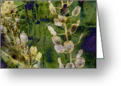 Soundscape Greeting Cards - Seedlinks Greeting Card by Robert Glover