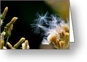 Seed Mixed Media Greeting Cards - Seeds in the wind Greeting Card by Robert Pearson