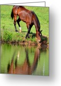 Maria Urso Greeting Cards - Seeing My Own Reflection Greeting Card by Maria Urso - Artist and Photographer