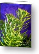 Morning Mist Images Greeting Cards - Selaginella Greeting Card by Judi Bagwell
