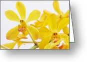 Merchandise Photo Greeting Cards - Selective Focus Greeting Card by Atiketta Sangasaeng