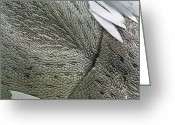 Antenna Greeting Cards - Sem Of The Antenna Of White Butterfly Greeting Card by Power And Syred
