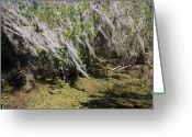 Florida Swamp Greeting Cards - Seminole Wind Greeting Card by Carol Groenen