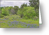 Blue Bonnets Greeting Cards - Senic Blue Bonnets Greeting Card by Linda Phelps