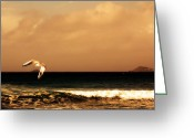 Lone Gull Greeting Cards - Sennen seagull Greeting Card by Linsey Williams