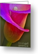 Plant Nursery Greeting Cards - Sensous Curves Greeting Card by Susan Candelario