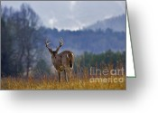 Rut Greeting Cards - Sentinel - D007903 Greeting Card by Daniel Dempster