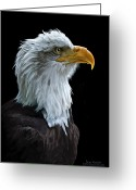 Bald Eagle Digital Art Greeting Cards - Sentinel Greeting Card by Bob Nolin
