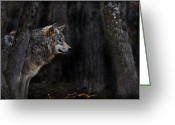 Wolves Mixed Media Greeting Cards - Sentinel Greeting Card by Michael Cummings