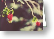 Macros Greeting Cards - Separate Lives Greeting Card by Laurie Search