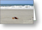 Cannonball Greeting Cards - Separation Anxiety Greeting Card by Al Powell Photography USA