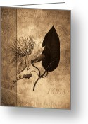 Ephemera Collage Greeting Cards - Sepia Botanical Greeting Card by Bonnie Bruno