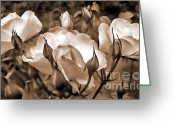 Dark Brown Greeting Cards - Sepia Rose Flower Garden Greeting Card by Jennie Marie Schell