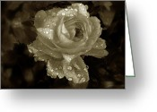 Duotone Greeting Cards - Sepia Rose Greeting Card by Jessica Jenney