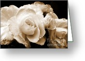 Dark Brown Greeting Cards - Sepia Roses with Rain Drops Greeting Card by Jennie Marie Schell