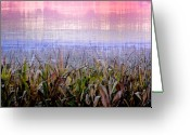 Cornfield Greeting Cards - September Cornfield Greeting Card by Bill Cannon