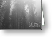 Biggest Tree Greeting Cards - Sequoia National Park in the fog ll - black and white Greeting Card by Hideaki Sakurai