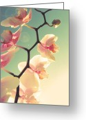 Peachy Greeting Cards - Serenade Greeting Card by Amy Tyler
