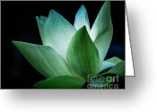 Aquatic Flower Greeting Cards - Serenity Greeting Card by Julie Palencia