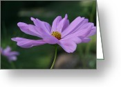 Wildflower Photos Greeting Cards - Serenity Greeting Card by Neal  Eslinger