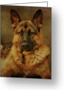 Shepherds Greeting Cards - Serious Greeting Card by Sandy Keeton