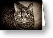 Fine Art Cat Greeting Cards - Serious Tabby Cat Greeting Card by Andee Photography