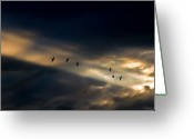 Sunset Light Greeting Cards - Seven Bird Vision Greeting Card by Bob Orsillo