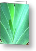 Macro Greeting Cards - Shades of Green Greeting Card by Kimberly Gonzales