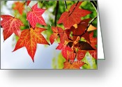 Colors Of Autumn Greeting Cards - Shades of Red Greeting Card by Kaye Menner