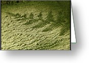 Tree Greeting Cards - Shadow of a fern Greeting Card by John Shook