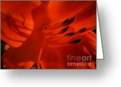 Flower Photograph Greeting Cards - Shadows flower photograph Greeting Card by Ann Powell