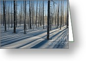 Yellowstone Landscape Art Greeting Cards - Shadows of the Forest Greeting Card by Sandra Bronstein